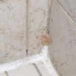 bathroom shower tub mold mushroom