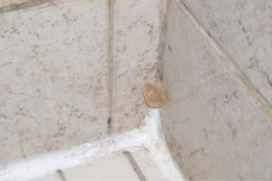 Mold In Bathroom From Shower ceramictec - a moldy situation – info on mold